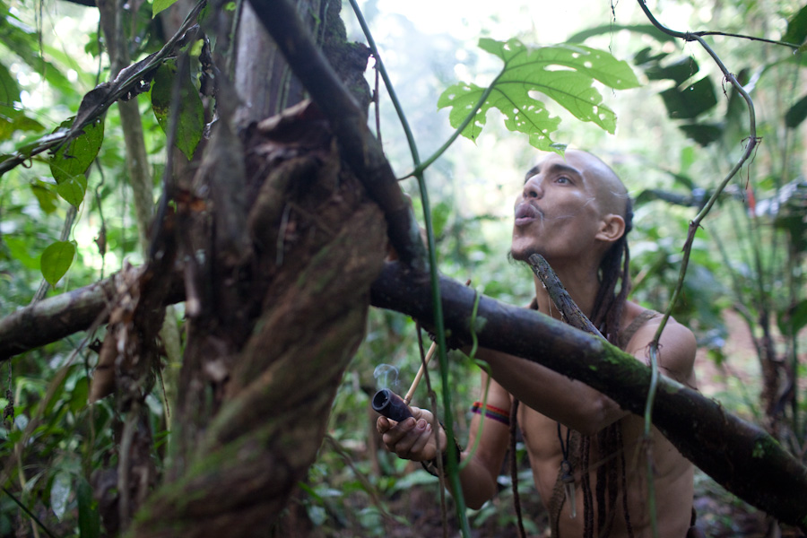 praying to ayahuasca vine with tabaco pipe before harvesting peru
