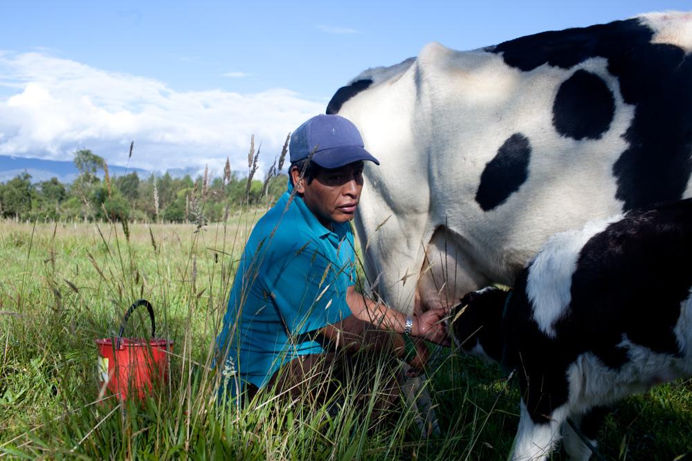 shaman milk a cow