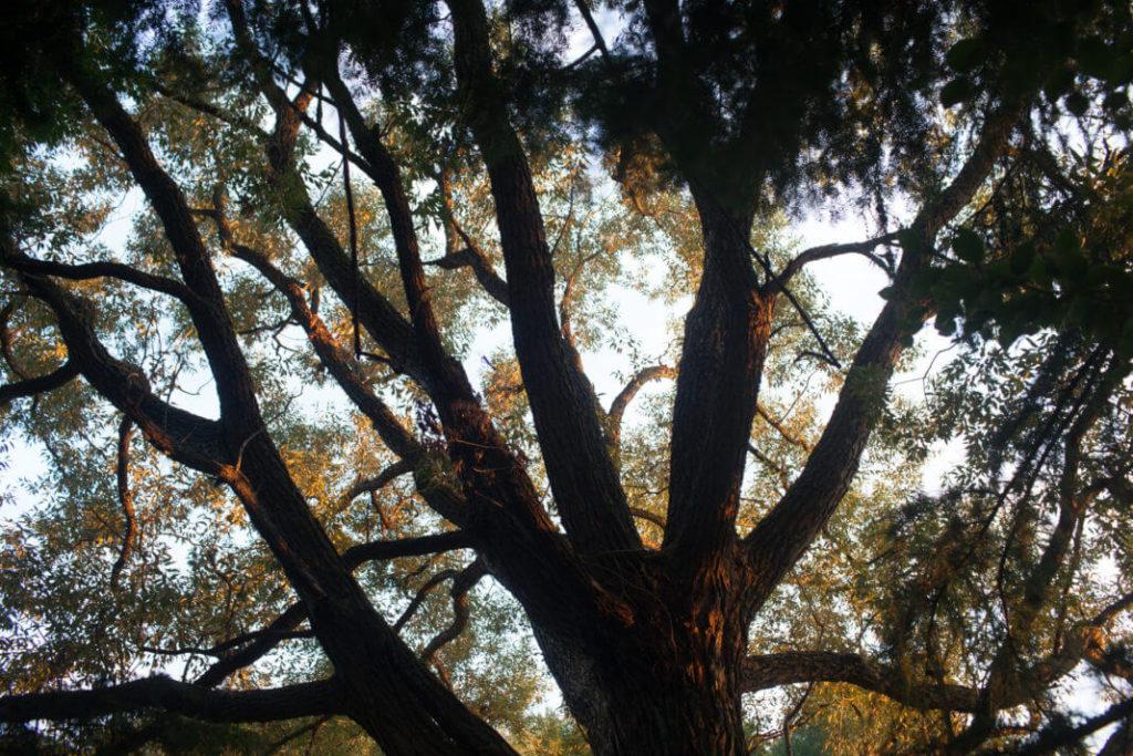 amazonian tree peru sunshine